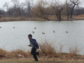 Mir running ducks behinf
